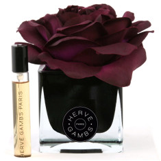Herve Gambs diffuser with plum rose in black cube