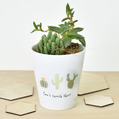 Can't Touch This Cactus Plant Pot