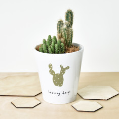 Looking Sharp Cactus Plant Pot
