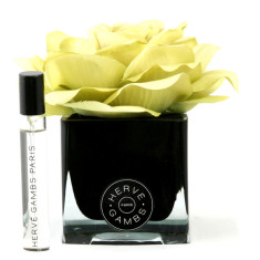 Herve Gambs diffuser with green rose in black cube
