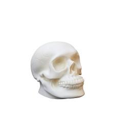Heico skull lamp
