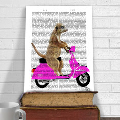 Meerkat on pink moped book print
