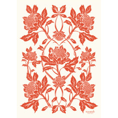 Waratah in tangerine tea towel