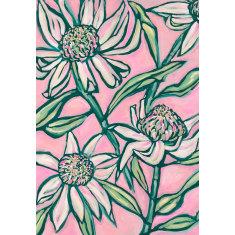 Pink Waratahs Art Print