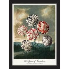 Carnations 1803 Print