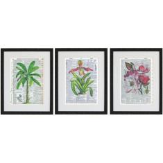 Lexicon art botanica print