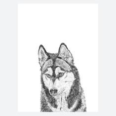Huskie Print