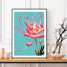 Grevillea art print (various sizes)