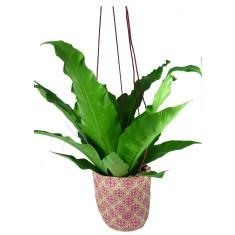 Baroque hanging pot plant holder
