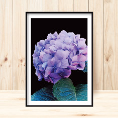 Hydrangea #2 art print (various sizes)