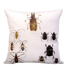 Beetle study cushion