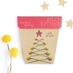 Four Christmas billy buttons gifts of seeds
