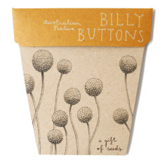 Billy buttons seed packet
