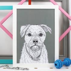 Border Terrier Dog Portrait Print