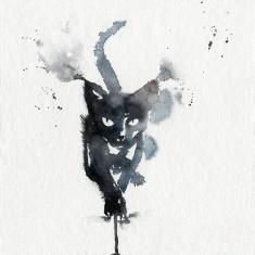 Don James's cat print