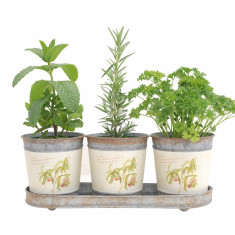 Classic herb set in botanical pots