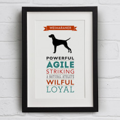 Weimaraner Dog Breed Traits Print