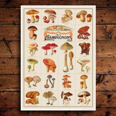 Champignons Print