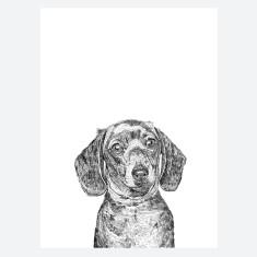 Daschund Dog Print