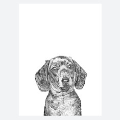 Dachshund Dog Print