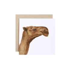 Camel greeting card (pack of 5)