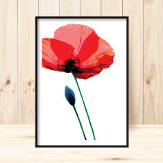 Poppy 1 art print (various sizes)