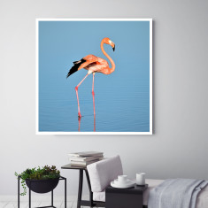 Flamboyant | Canvas Art