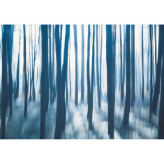 Blue Forest - COLOUR SHOT