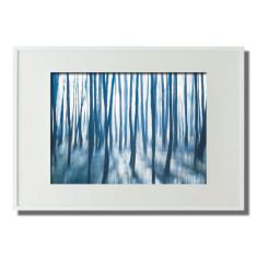 Blue Forest - COLOUR SHOT