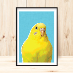 Yellow budgie art print