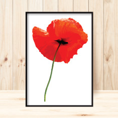 Poppy 2 art print (various sizes)