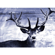 Deer at dawn ready to hang canvas art