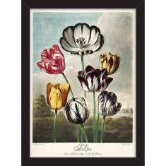 Tulips 1798 Print