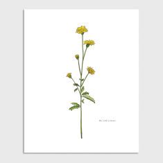 Wildflower Botanical Watercolour Illustration Art Print