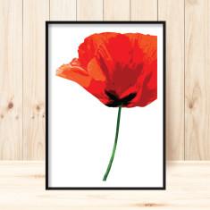 Poppy 3 art print (various sizes)
