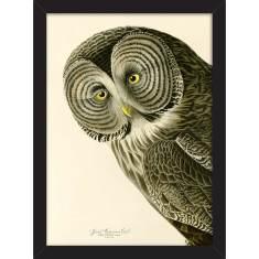 Cinereous Owl Print