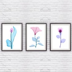 X Ray Floral Set of 3 Prints