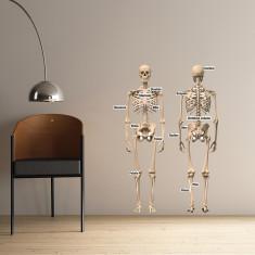 Educational human skeleton wall sticker