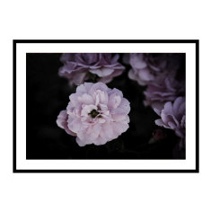Midnight Blooms Print