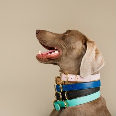 Premium Leather Dog Collar (Various Colours)