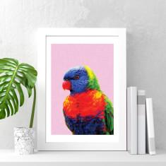 Rainbow lorikeet art print (various sizes)
