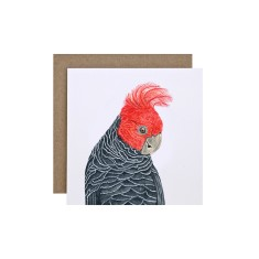 Gang Gang Cockatoo Greeting Card (pack of 5)