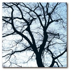 Fifty50 cardboard art print - Old trees 1
