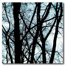Fifty50 cardboard art print - Old trees 2