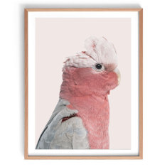 Rosie the Pink Cockatoo Print