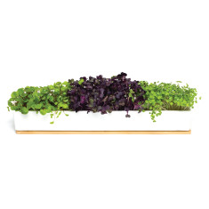 Microgreens Windowsill Box Grow Kit