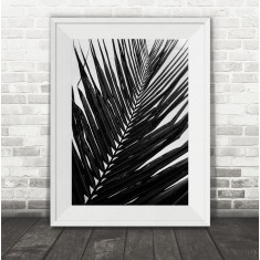 Mono Palm Leaf Photography Print