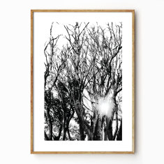 Liquid Light photographic wall art print