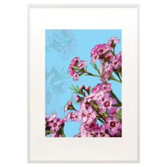 Geraldton wax print