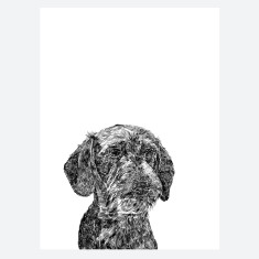 Wire Haired Dachshund Print